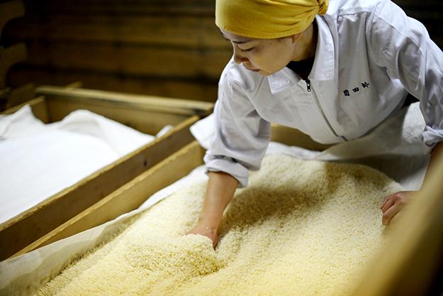 麹菌の繁殖を促すために「へぎ(木箱)」に盛り込む作業。日本酒の吟醸香のような麹の香りが漂います