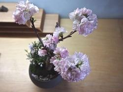 鉢の中に、若い苗木と苔を使って緑のある景色をつくっていく「景色盆栽」。会場では手入れ用の鋏などの道具一式も販売します。