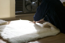 一枚の座布団に大量の綿ワタが押し込まれています。