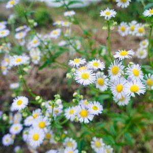植物もたくさんいます!いっぱい自然に触れてください。