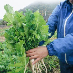 採れたての野菜でのBBQ…格別です!
