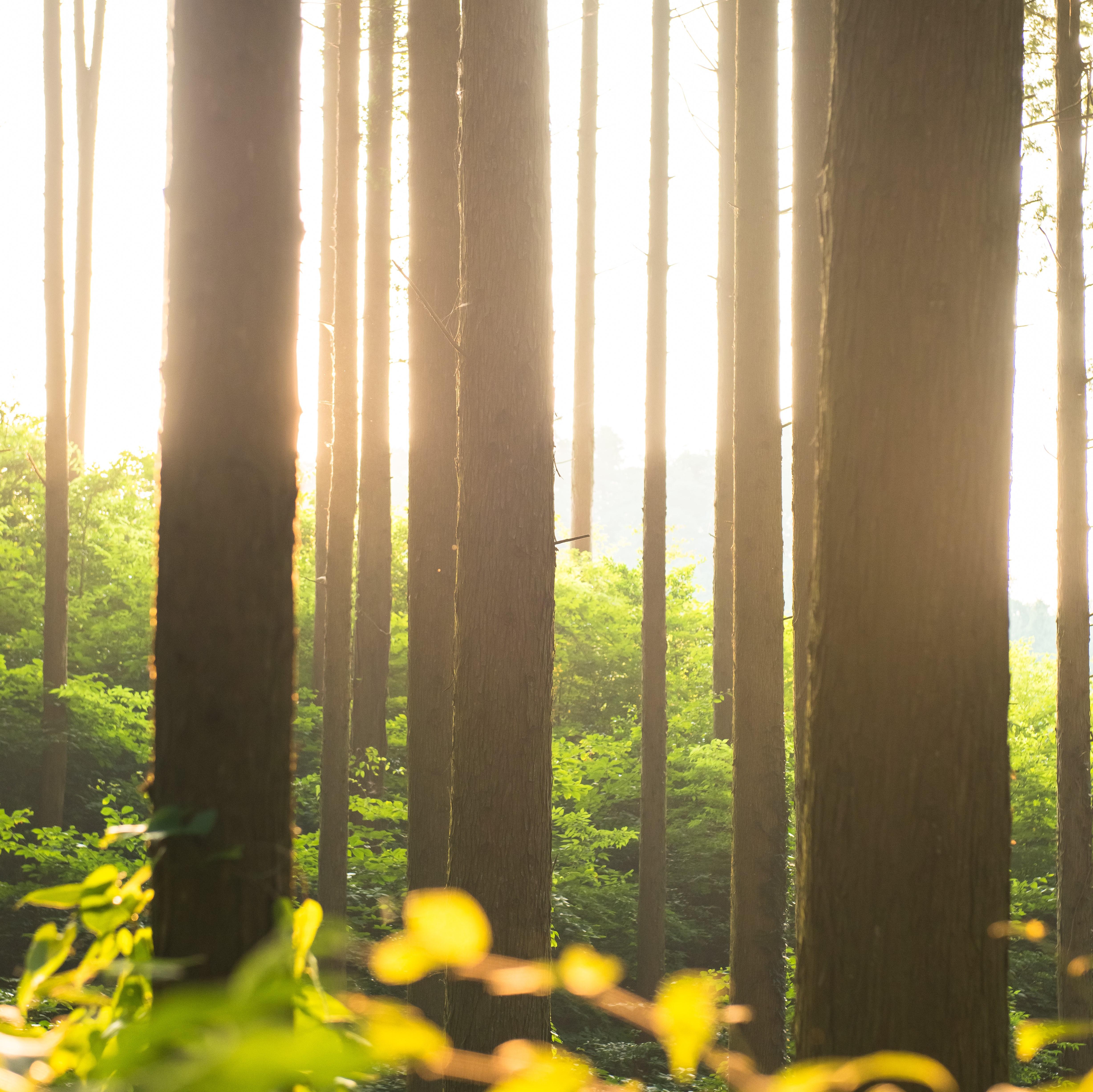 たとえば、黄金色の光が輝くこんな森。そこではどんな木々や草花の香りがするのでしょう…