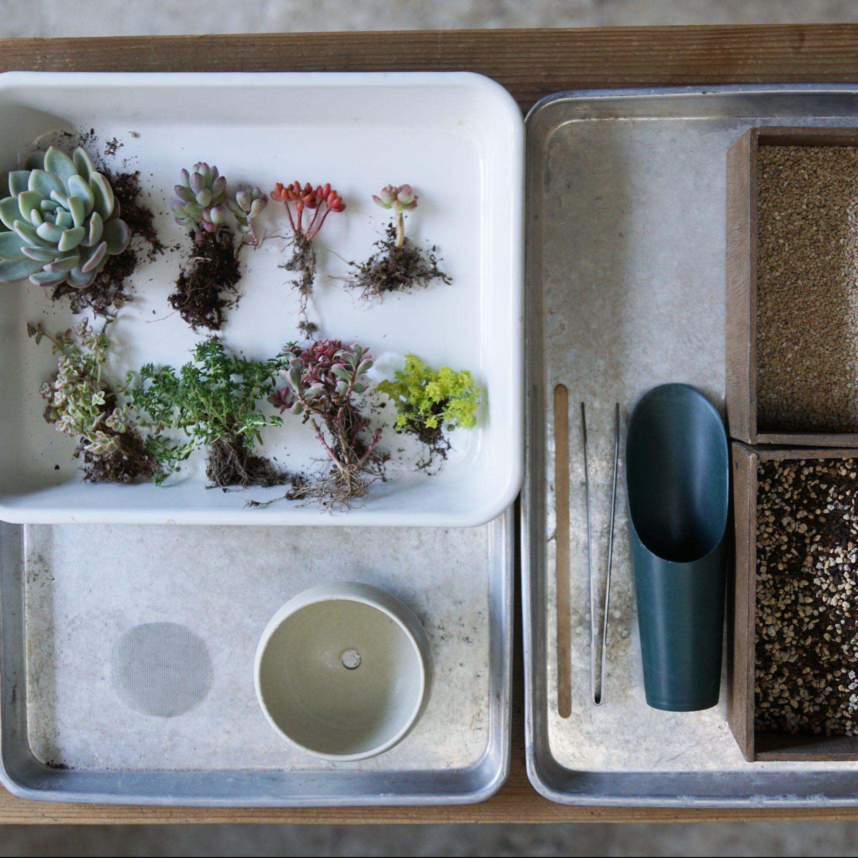 寄せ植えに必要なものは、全てTOKIIROさんが準備してくれます。あなたが持ってくればいいものは、タニクちゃんと戯れるワクワクだけ!