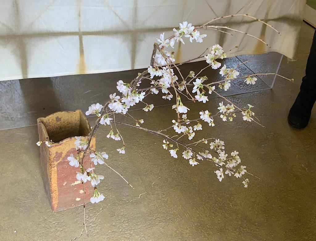 花付きのものがおちあいさんのギャラリーに飾られていました。こちらは室内で人口的に早めに咲かせたものとのこと。お越しの際はぜひご覧くださいね。