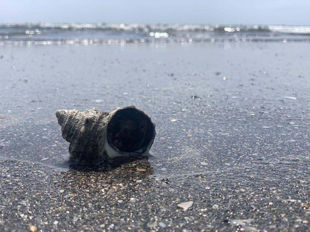 久々に貝殻を耳に当てて、海の音を聞いてみました。