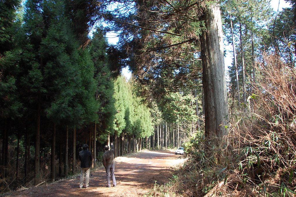 morinochikara1
